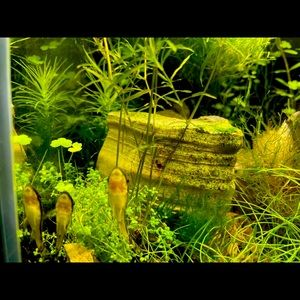 the whole tank include the betta fish and the other small fish